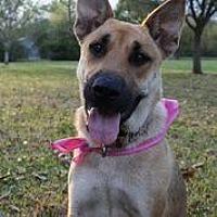 German Shepherd Dog Dog for adoption in Hankamer, Texas - Patty- Watch My VIDEO