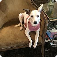 Adopt A Pet :: Maui - Gig Harbor, WA