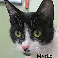Adopt A Pet :: Myrtle - Warren, PA