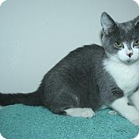 Adopt A Pet :: Tinkerbelle - Santa Rosa, CA