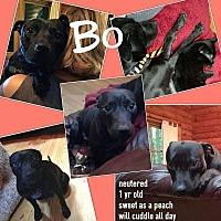 Adopt A Pet :: Bo - Unionville, VA