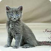 Adopt A Pet :: Curly - Edmond, OK