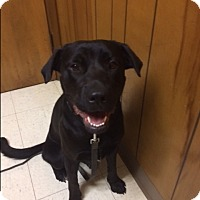 Adopt A Pet :: Mae - San Antonio, TX