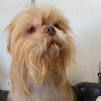 Adopt A Pet :: Dino - Yucaipa, CA