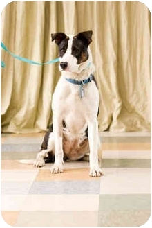 Border Collie Mix Dog for adoption in Portland, Oregon - Sweet Pea