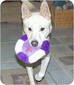 Spitz (Unknown Type, Medium) Mix Dog for adoption in Southern California, California - HwanHei - C