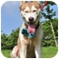 Photo 1 - Husky Mix Dog for adoption in Vancouver, British Columbia - Alaska - Pending