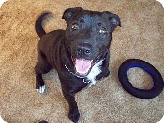 Border Collie/Terrier (Unknown Type, Medium) Mix Dog for adoption in Upper Saddle River, New Jersey - Nia