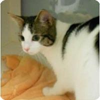 Adopt A Pet :: Noel - Maywood, NJ