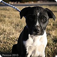 Adopt A Pet :: SQUEEZY HAPPYPAWS - Broomfield, CO
