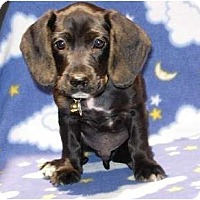 Adopt A Pet :: Hot Rod - Kingwood, TX