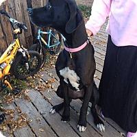 Adopt A Pet :: Joss - Albuquerque, NM
