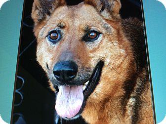 German Shepherd Dog Mix Dog for adoption in Los Angeles, California - DEXTER VON LIEB