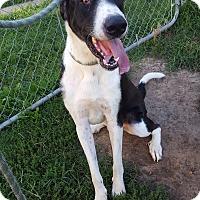 Adopt A Pet :: Duke - Fort Riley, KS