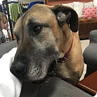 Adopt A Pet :: Tony - Stevens Point, WI