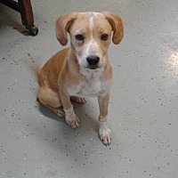 Adopt A Pet :: Noah - Oakdale, LA