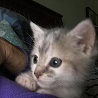 Adopt A Pet :: Rumble - Winston-Salem, NC