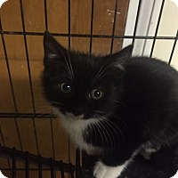 Adopt A Pet :: Tootsie - Forest Hills, NY