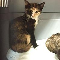 Adopt A Pet :: Queen - Hammond, LA