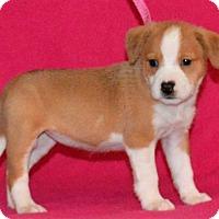 Adopt A Pet :: **JULISSA** meet July 8th! - Mukwonago, WI