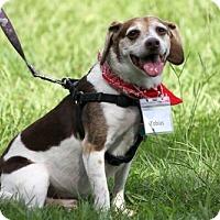 Adopt A Pet :: Tobias - Tampa, FL