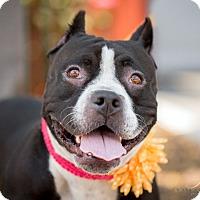 Adopt A Pet :: Lilly - Vista, CA
