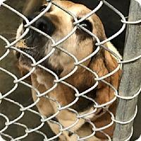 Adopt A Pet :: Eleanor - Charleston, SC