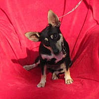 Adopt A Pet :: Sally - Oakland, AR