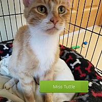 Adopt A Pet :: Miss Tuttle - Brookings, SD