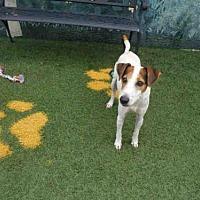 Adopt A Pet :: BUDDY - Winter Haven, FL