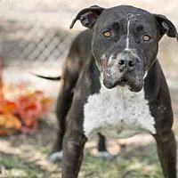 Adopt A Pet :: FONZY - Los Angeles, CA