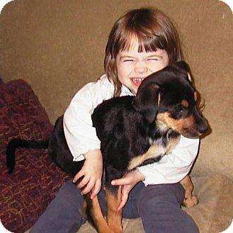 Rottweiler/Australian Shepherd Mix Puppy for adoption in West Warwick, Rhode Island - Lacey - Has A Video!