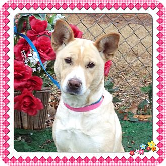 Australian Cattle Dog Mix Dog for adoption in Marietta, Georgia - JUICE