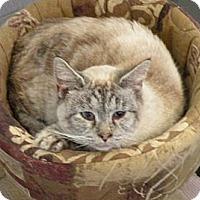 Adopt A Pet :: Lizzy Main - Rohrersville, MD