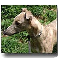 Adopt A Pet :: Orbit - Roanoke, VA
