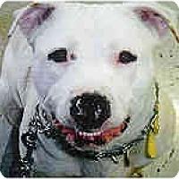 Adopt A Pet :: Sally - Hoffman Estates, IL