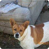 Adopt A Pet :: Skippy in Houston - Houston, TX