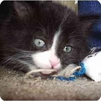 Adopt A Pet :: Fleck - Davis, CA