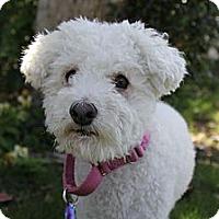 Adopt A Pet :: Brian - Mission Viejo, CA