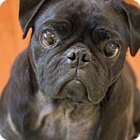 Adopt A Pet :: Doug - Pismo Beach, CA