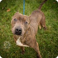 Adopt A Pet :: Champ - ADOPTED! - Zanesville, OH