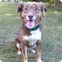 Adopt A Pet :: Kate - Mocksville, NC