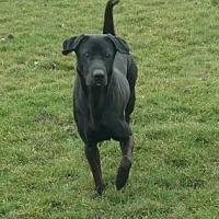 Adopt A Pet :: Zero - Ashtabula, OH