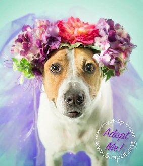 Labrador Retriever Mix Dog for adoption in Atlanta, Georgia - Bella