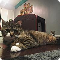 Adopt A Pet :: Melanie - New York, NY