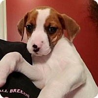 Adopt A Pet :: Itty Bitty - Winchester, VA