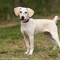 Adopt A Pet :: Rambo - Dacula, GA