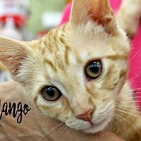 Adopt A Pet :: Mango - Wichita Falls, TX