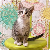 Adopt A Pet :: Eenie - Sterling Heights, MI