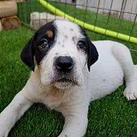 Adopt A Pet :: Theodore - Chicago, IL
